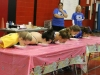 Girls' Pie-Eating Contest