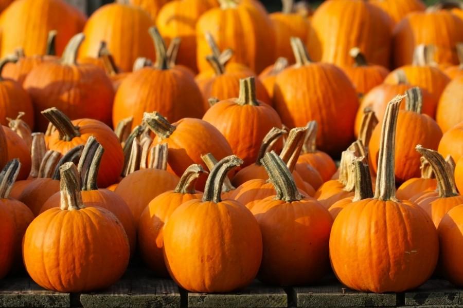 More+than+Pumpkin+Spice+Lattes